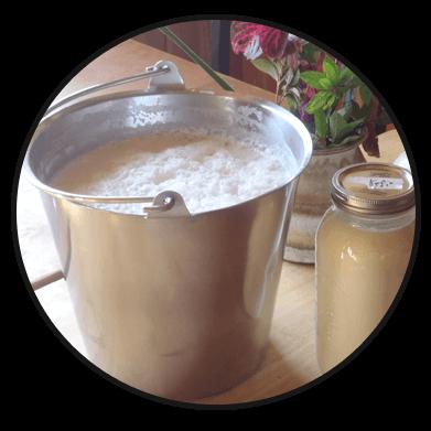 Gaumiya Milk